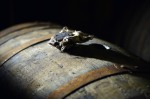A cask with its bung taken out for tasting lies in the wearhouse at Glenrothes Distillery